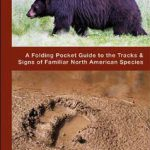 Animal Tracks: A Folding Pocket Guide to the Tracks & Signs of Familiar North American Species (P…